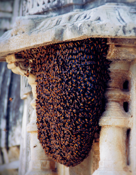 Bees printing concrete by John Becker and Geoff Manaugh