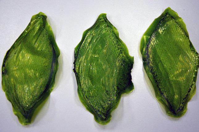 Silk Leaf by Julian Melchiorri