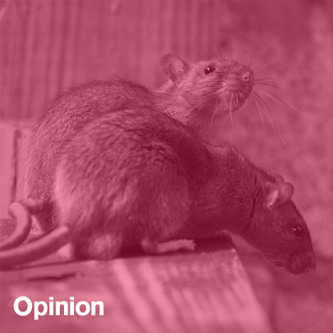 Rats_dezeen_sq