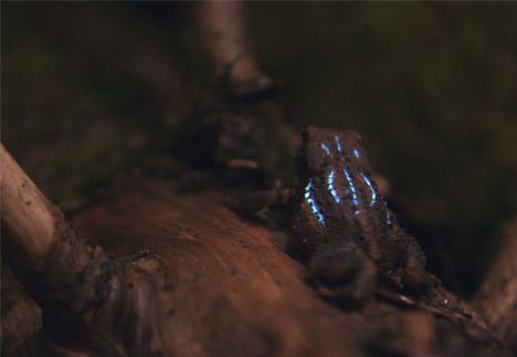 Bioluminescent Forest by Tarek Mawad and Friedrich van Schoor