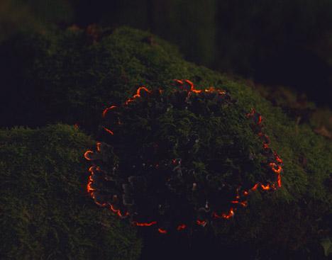 Bioluminescent-Forest-by-Tarek-Mawad-and-Friedrich-van-Schoor_dezeen_468_7