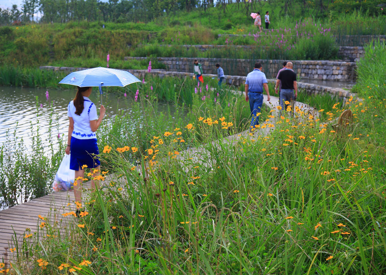Minghu Wetland Park by Turenscape