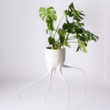 Tim van de Weerd's Monstera plant pots balance on spindly legs