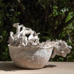 """Growing products from fungus could be the start of a """"biotechnological revolution"""""""