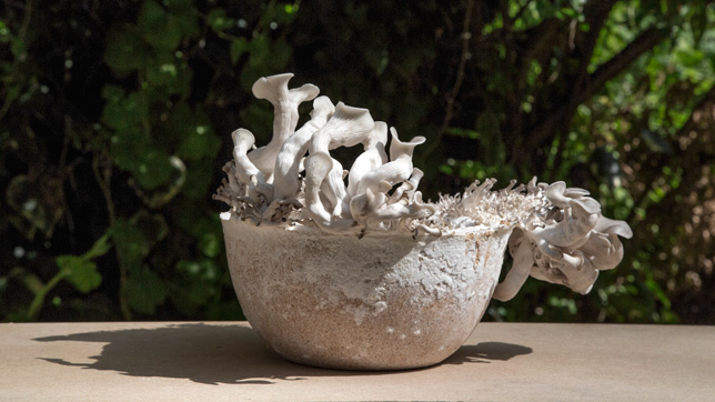 Bowl made out of mycelium by Officina Corpuscoli