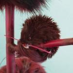 Kathryn Fleming proposes engineering animals to thwart extinction