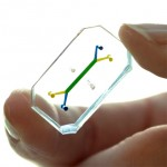 Microdevices that mimic human organs could replace animal testing