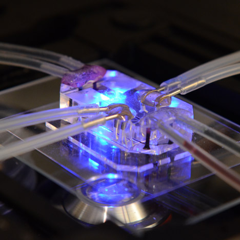 Human Organs-on-Chips wins Design of the Year 2015