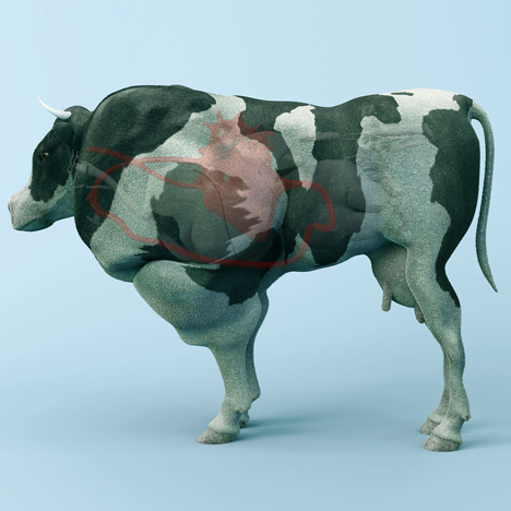 Bloodflow of beefed-up bovines harnessed for energy in The Cow of Tomorrow project