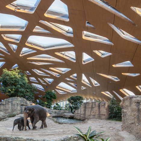 Elephant House by MSA