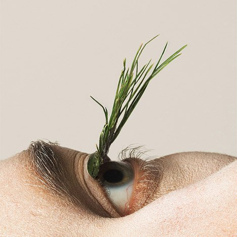 Mary Graham replaces false eyelashes with foraged plants
