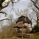 Nozomi Nakabayashi creates writer's hut on stilts in the Dorset woods