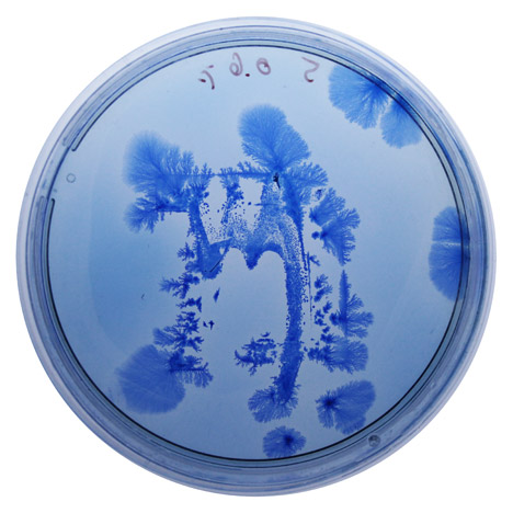 BioDesign ink by Ori Elisar