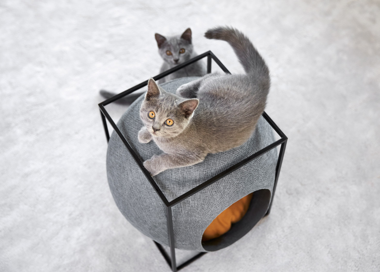 Cat cocoons feature in Meyou's debut furniture collection