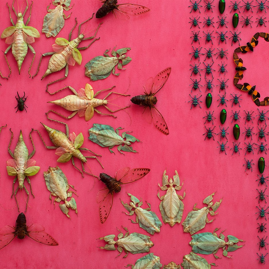 Bugs adorn the walls at renovated Renwick Gallery in Washington DC
