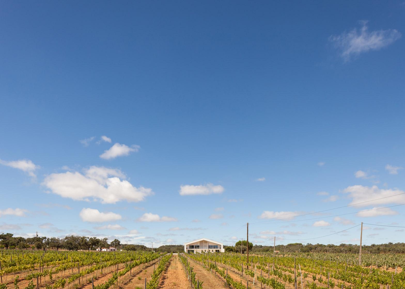 Herdade do Cebolal Winery by Ribeiro de Carvalho Arquitectos