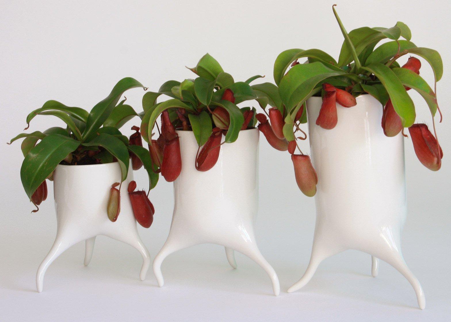 The Carnivora plant pots by Tim Van de Weerd