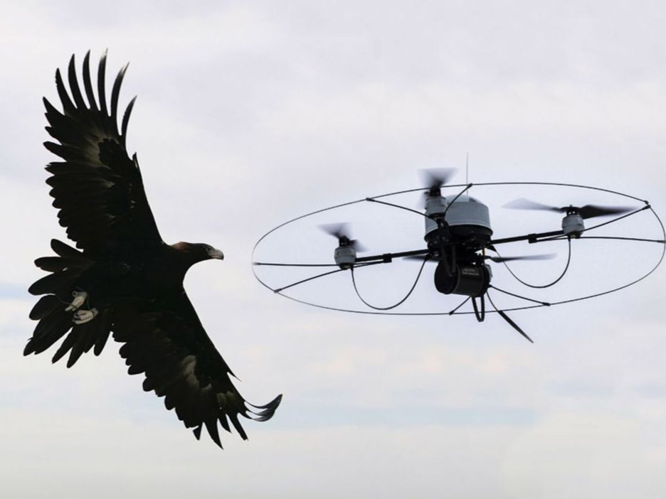 Metropolitan Police considering using eagles to tackle rogue drones