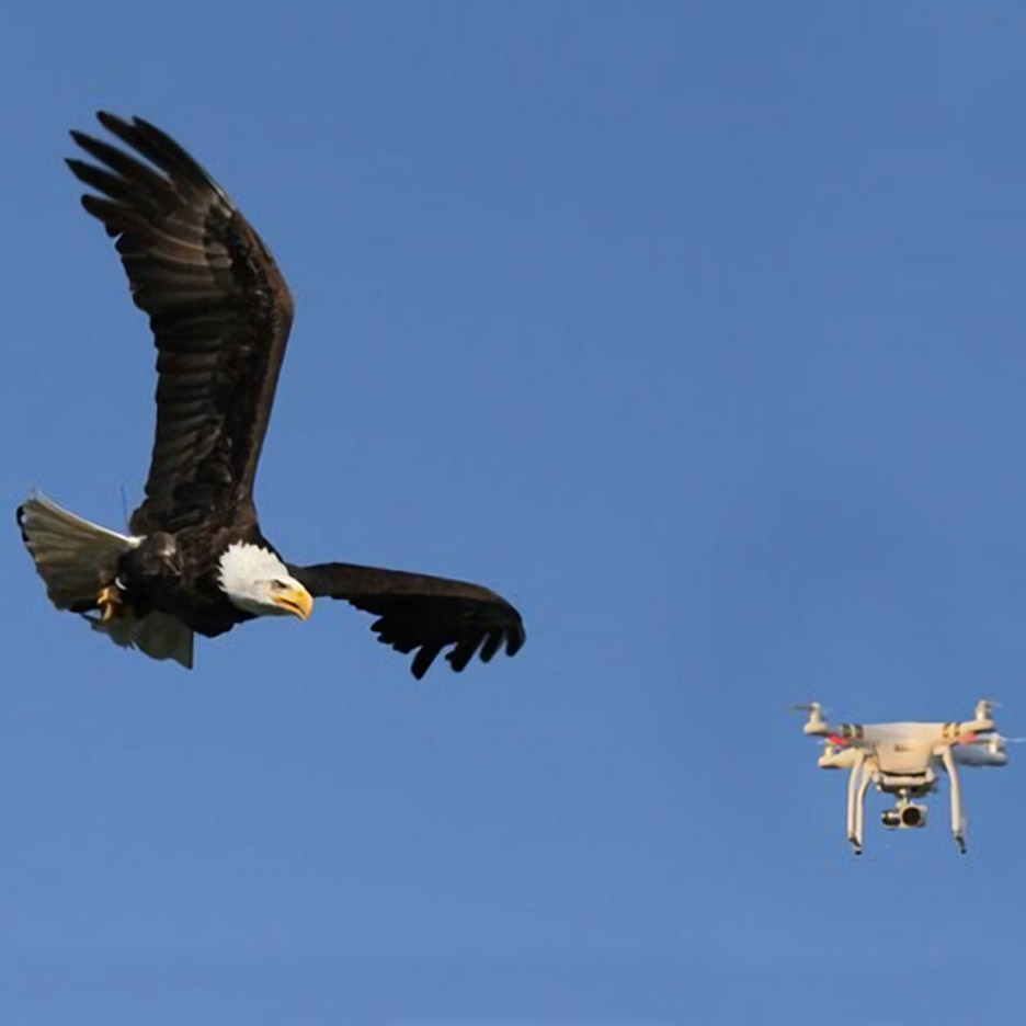 "Eagles could be used to take down ""hostile drones"" in London after Dutch trial"
