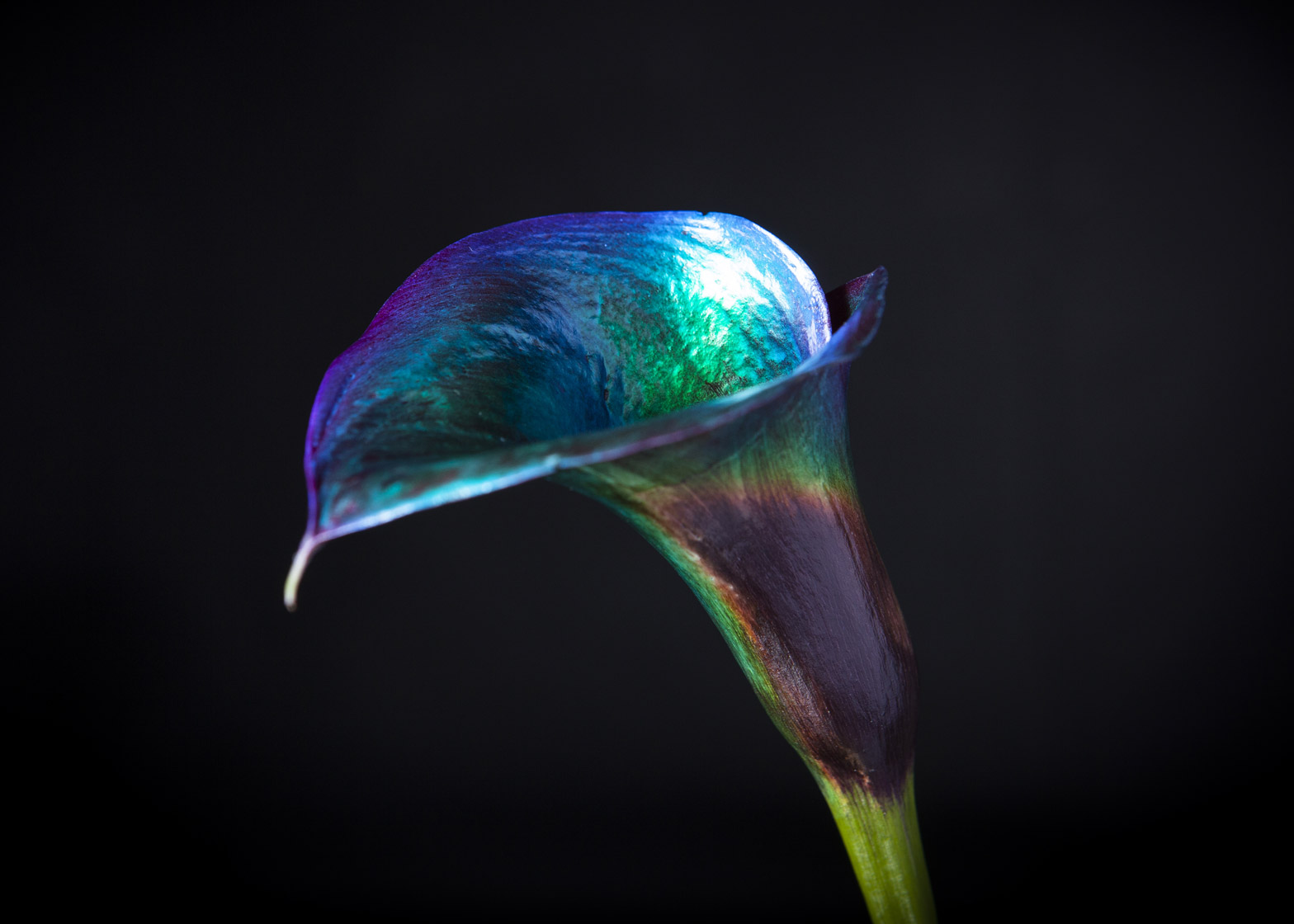 Bompas & Parr has developed two forms of colour-changing botanicals
