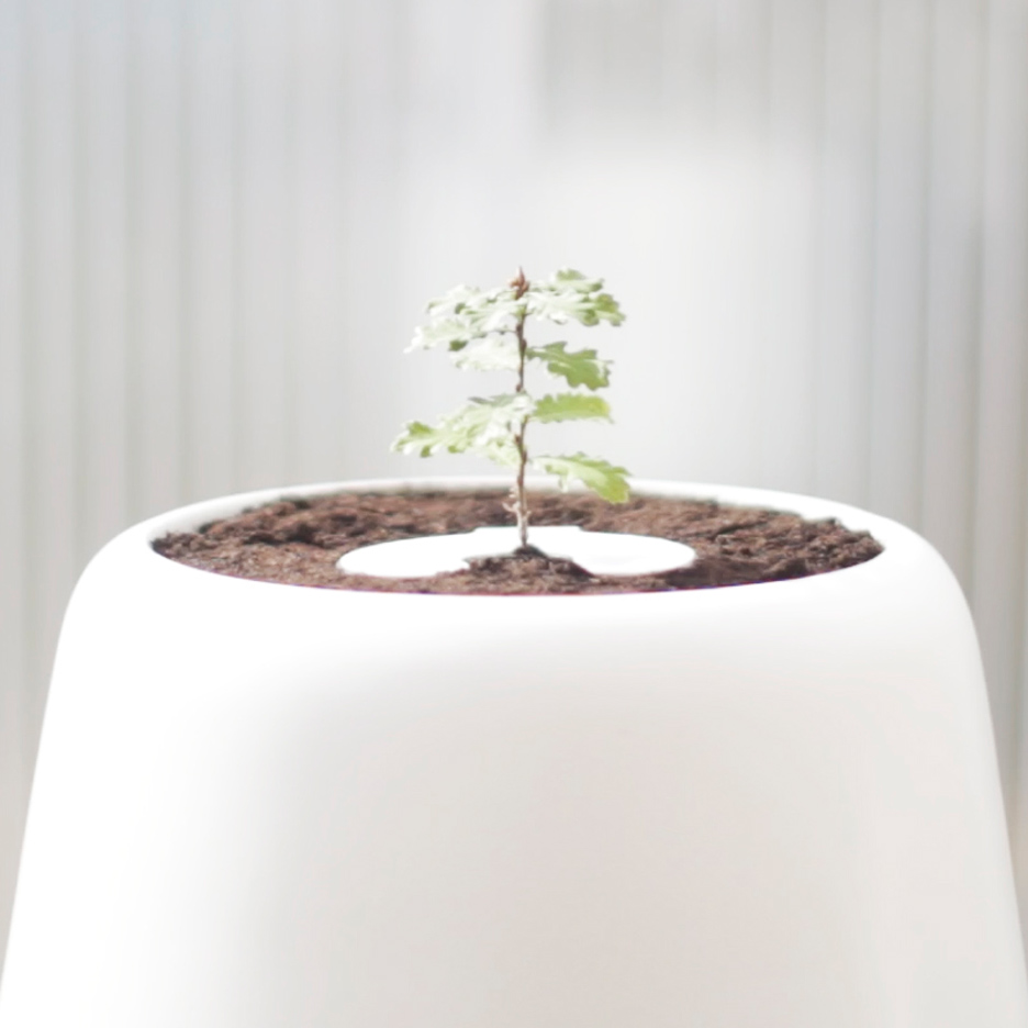 Bios Incube turns ashes of cremated bodies into trees
