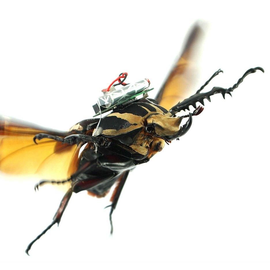 Cyborg beetles by a team from Nanyang Technological University in Singapore and the University of California Berkley