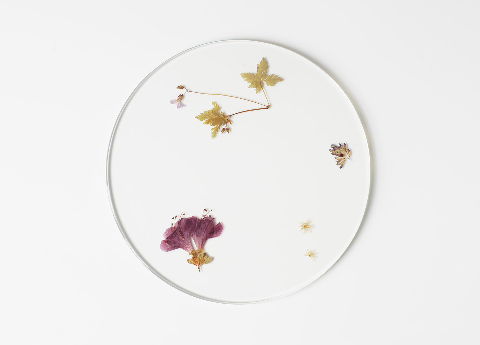 Evergreen platters by Meike Harde