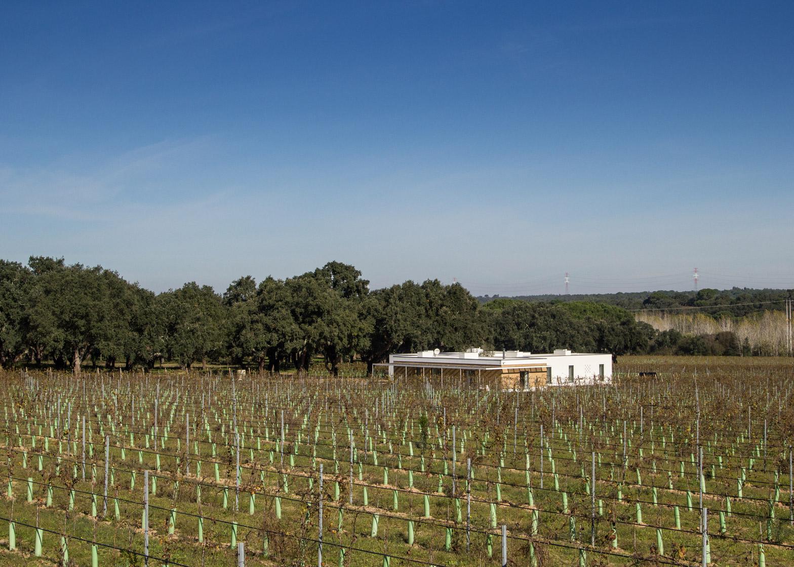 Vineyard House by Blaanc