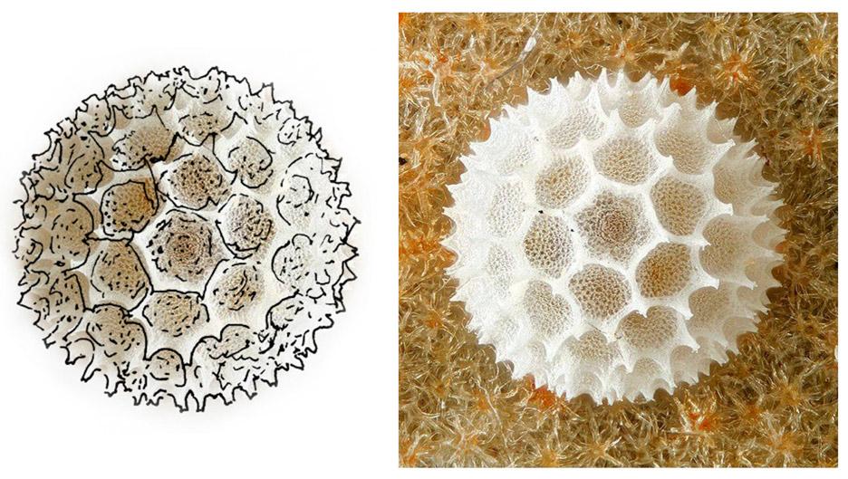the-butterfly-egg-tia-kharrat-biomimicry-westminster-architecture-graduate_dezeen_sketcha