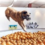 Dominic Wilcox designs contemporary art exhibition for dogs