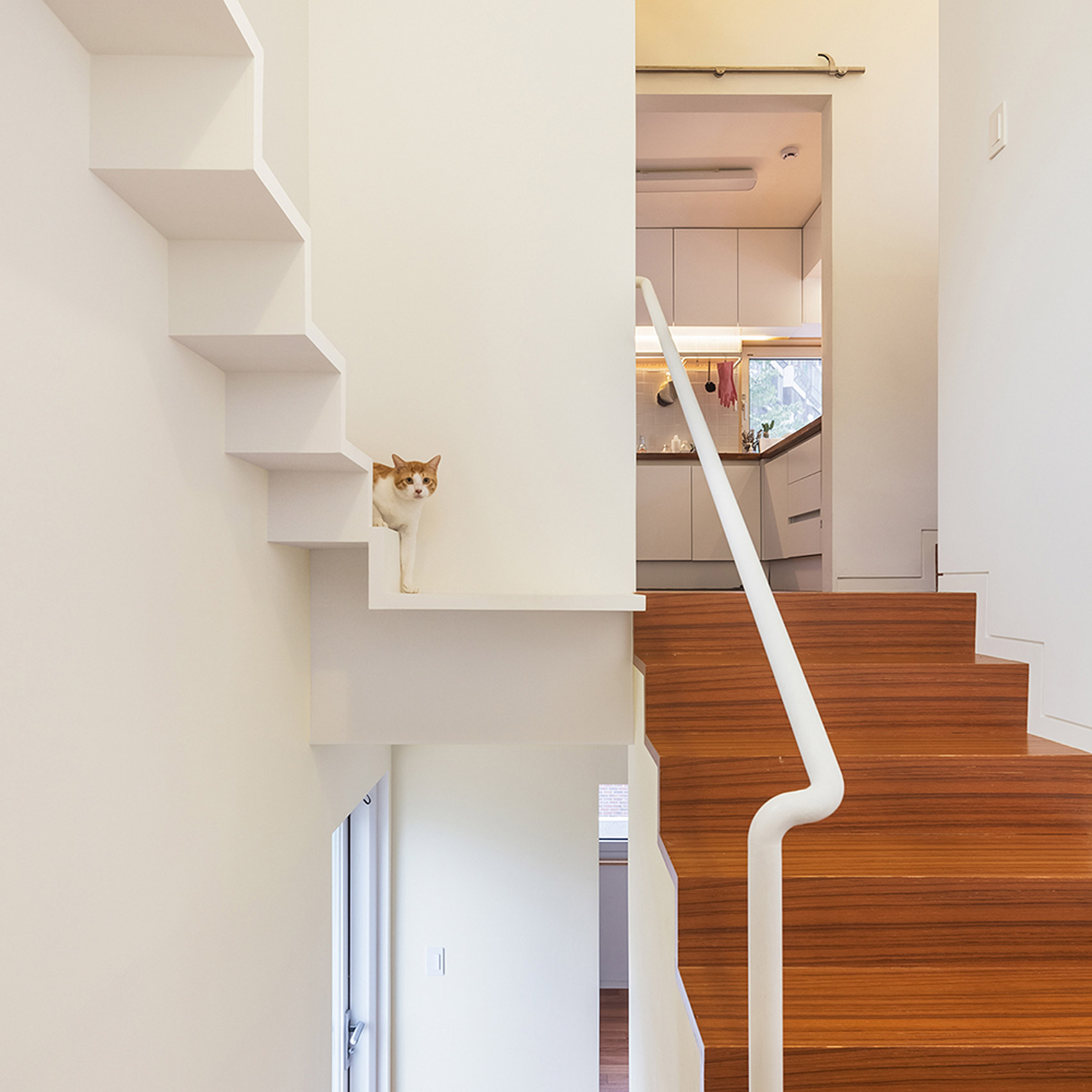 Uncategorized Cat Walkway In House six houses designed as playgrounds for cats