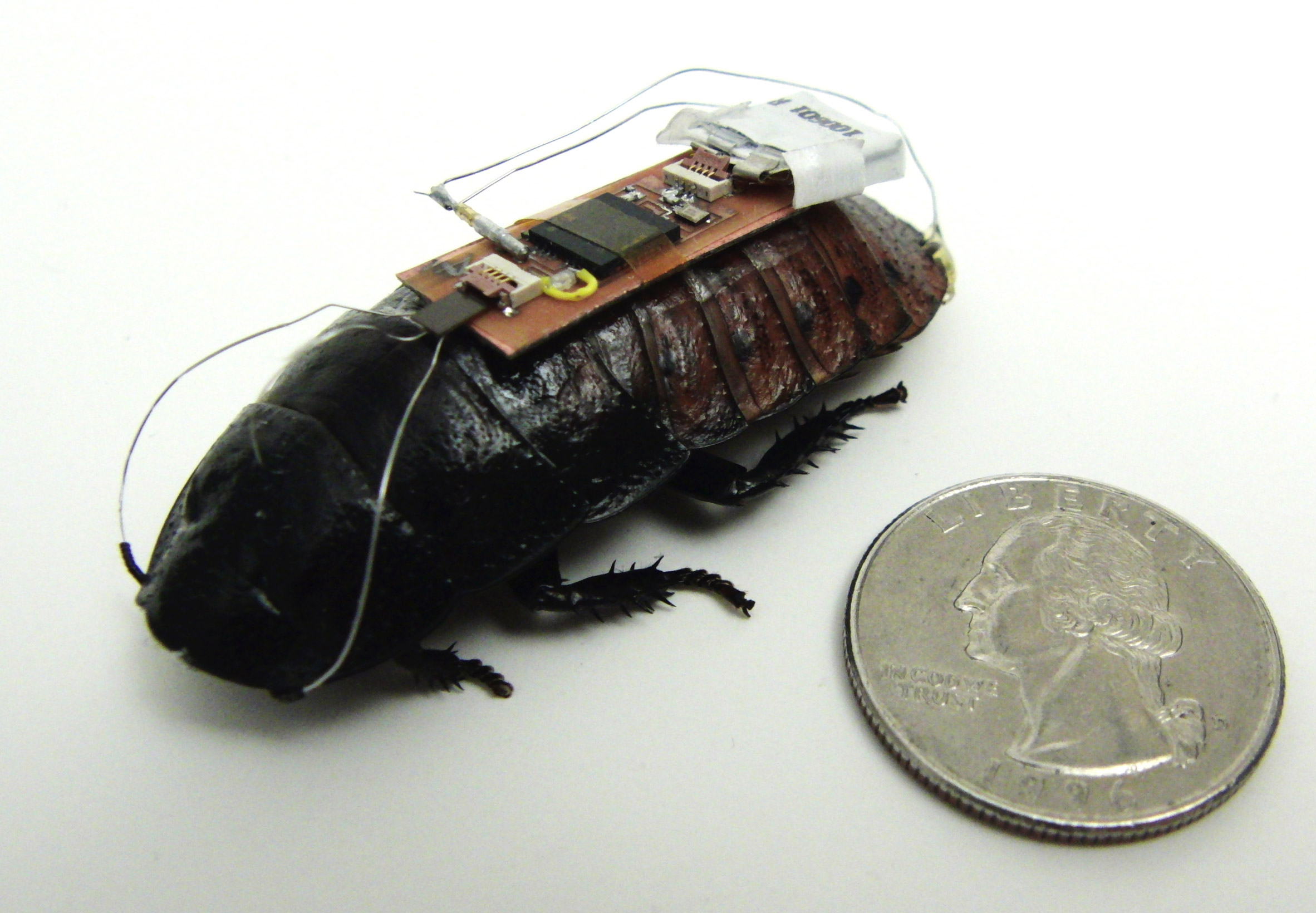 Swarms of cyborg insects could be used to map dangerous environments