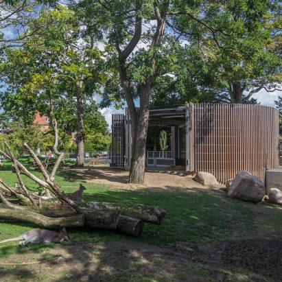 house-tasmanian-kangaroos-white-arkitekter-copenhagen-zoo_dezeen_sqb