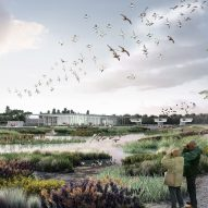 "McGregor Coxall proposes wetland ""bird airport"" for northern China"