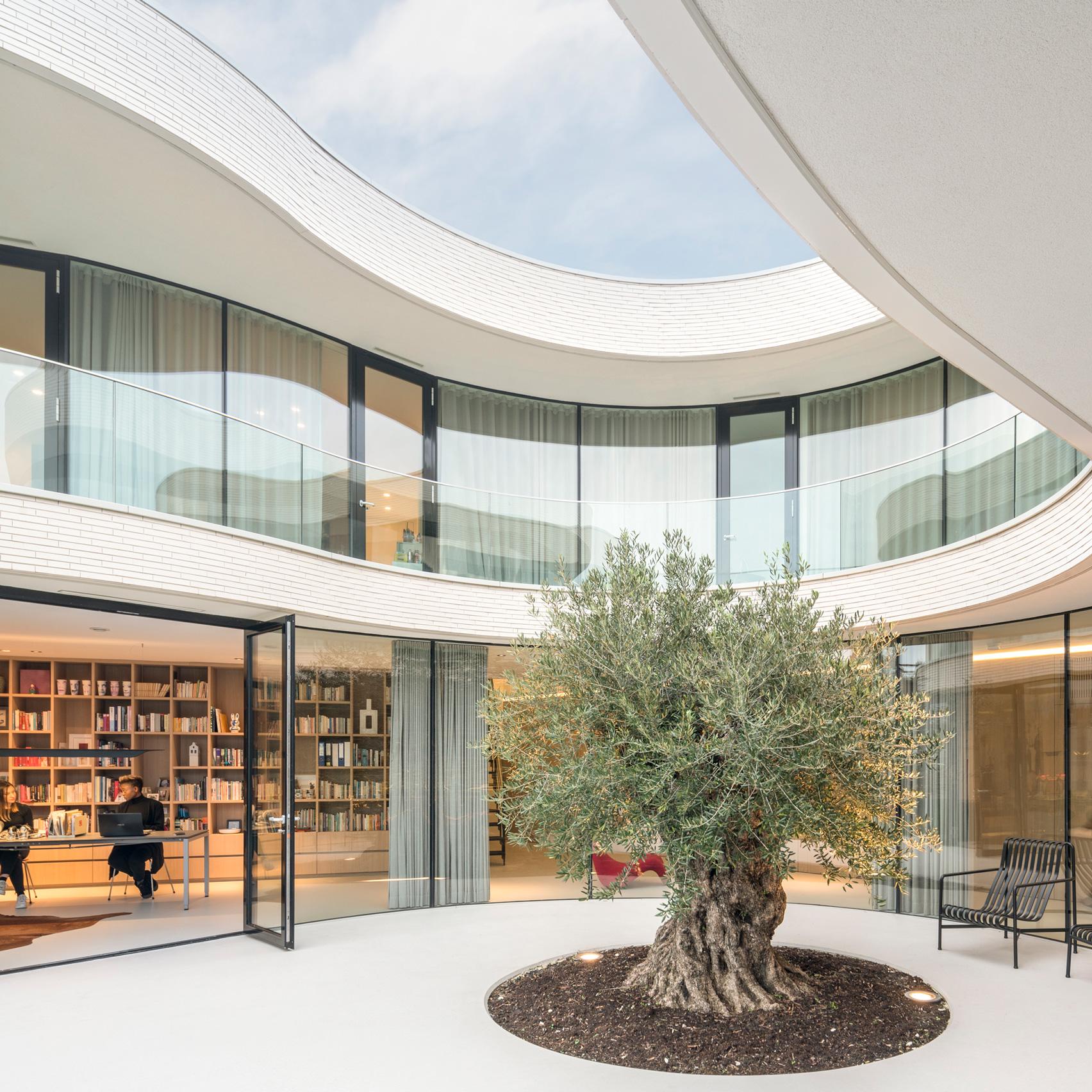 MVRDV Wraps Rotterdam House Around A Mature Olive Tree
