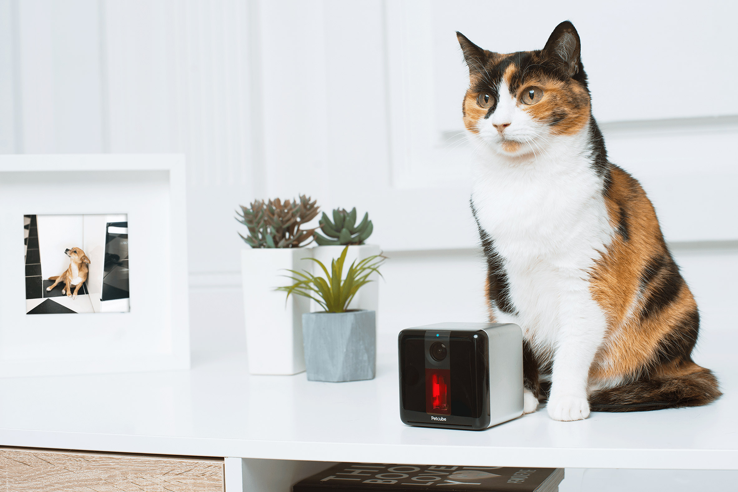 Petcube Play lets you interact with your pet remotely from a smartphone