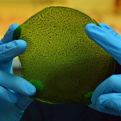 synthetic biological leaf