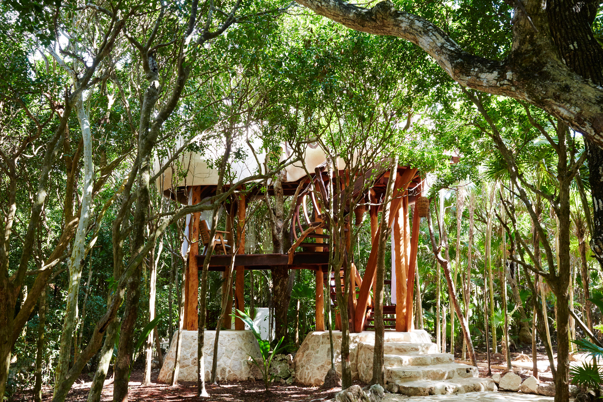 Treehouse hotel room peeps above canopy of Mexico's tropical woodland