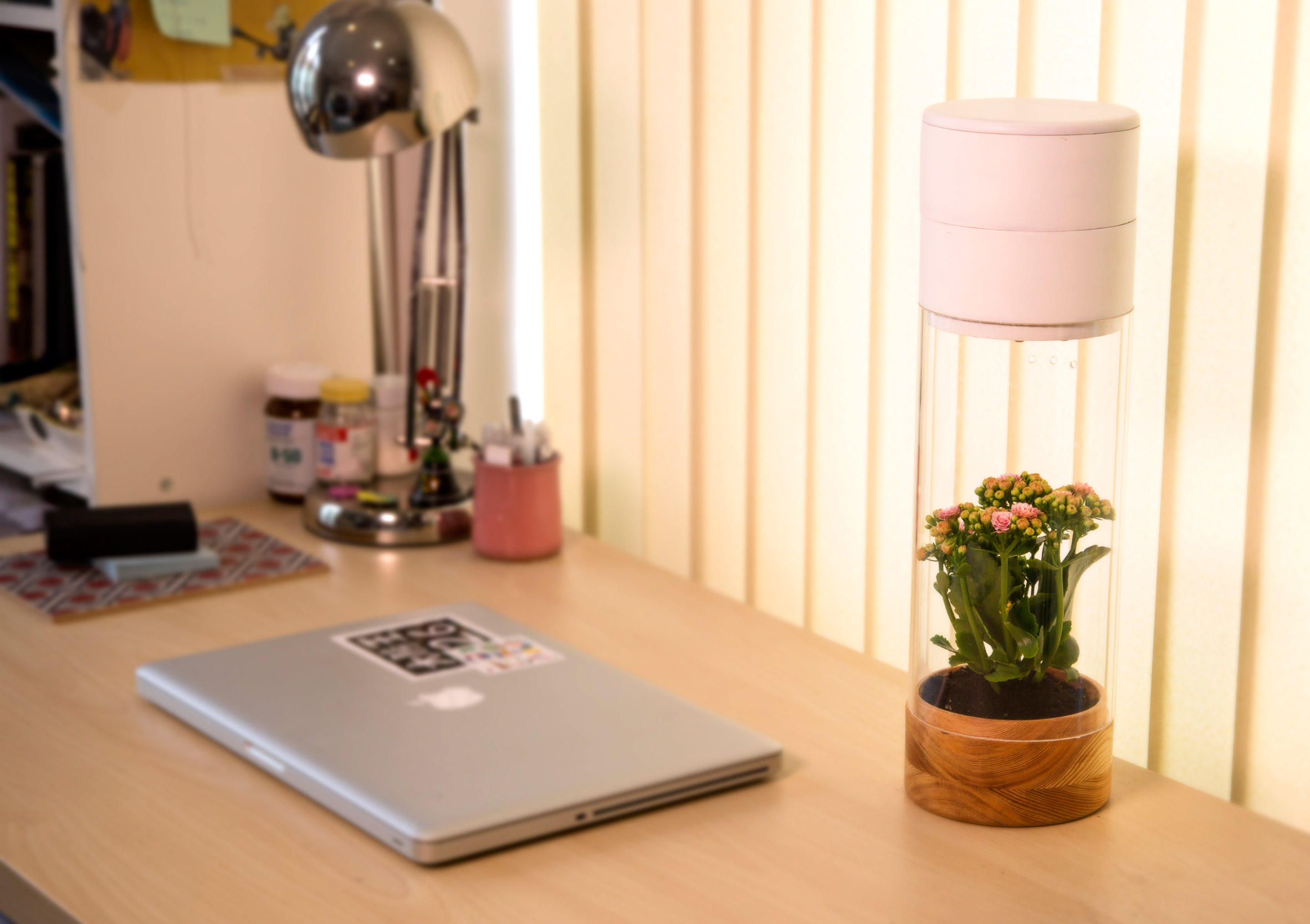 Phabit device rewards your daily exercise by keeping a plant alive