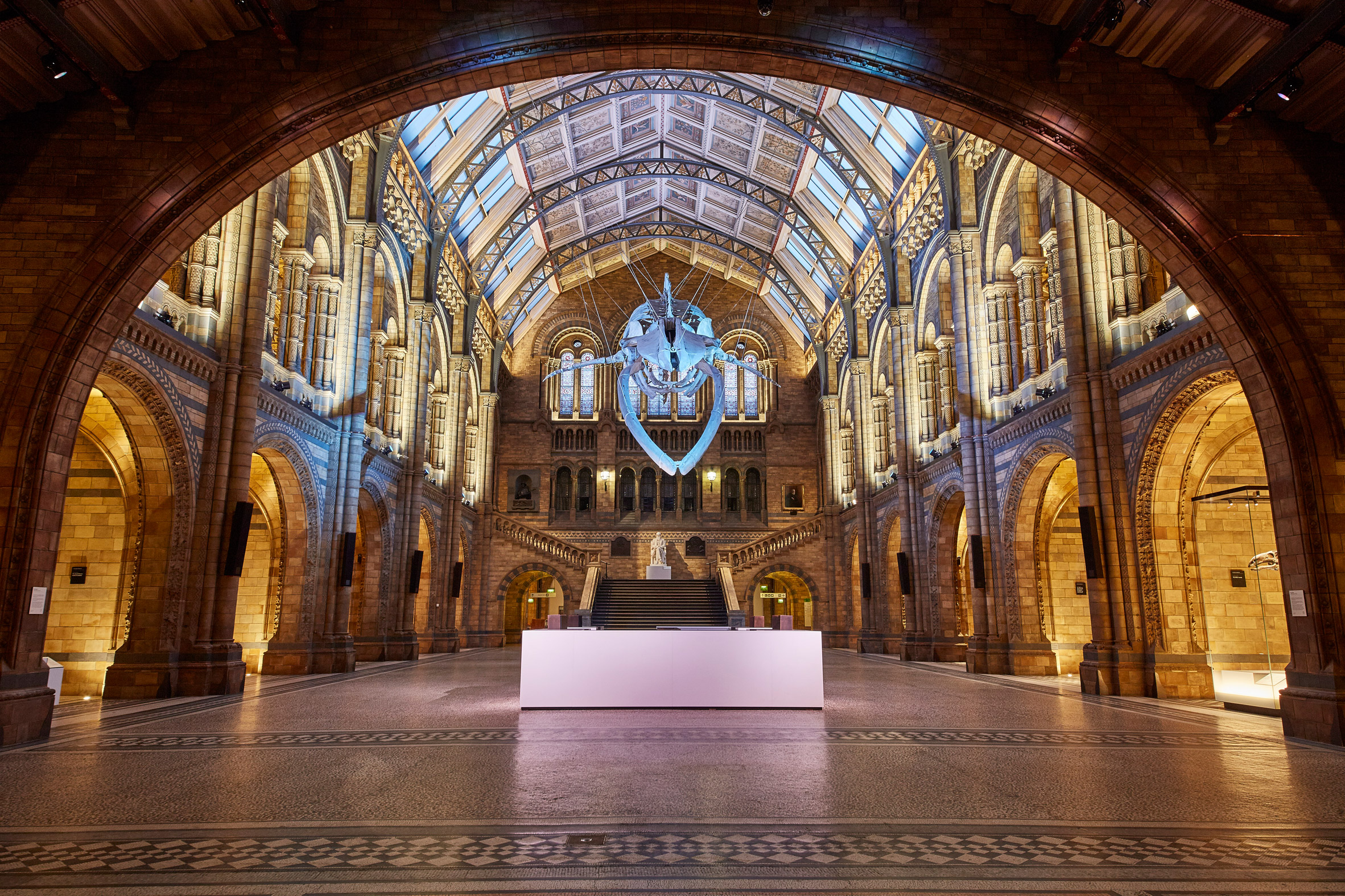 Whale skeleton suspended over information kiosk and bar in revamped Natural History Museum foyer