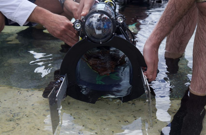 RSE Guardian LF1 robot humanely catches invasive lionfish