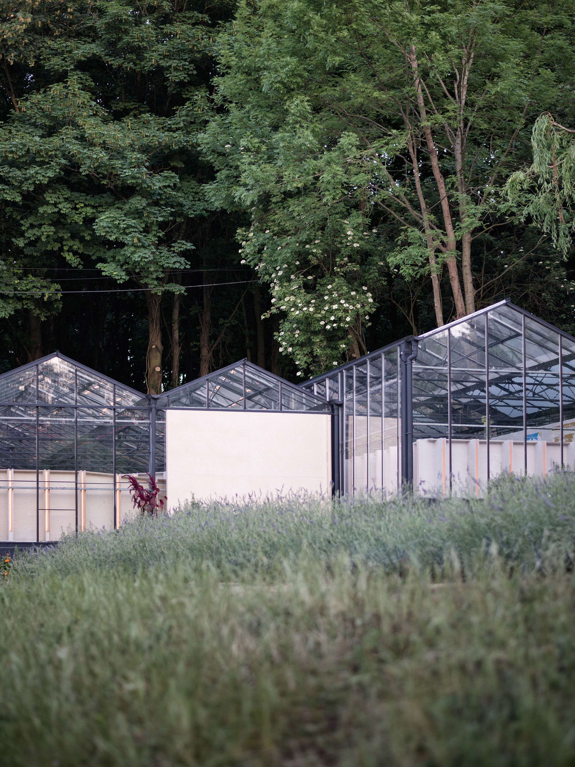 HASA Architects converts derelict glasshouses into events space in Highgate