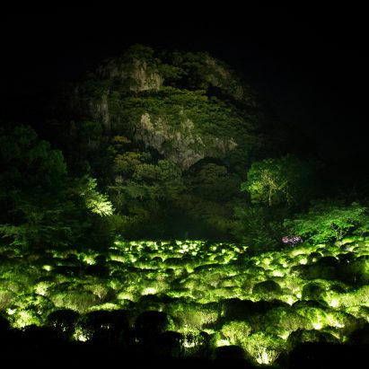 teamLab's installation is named A Forest Where Gods Live