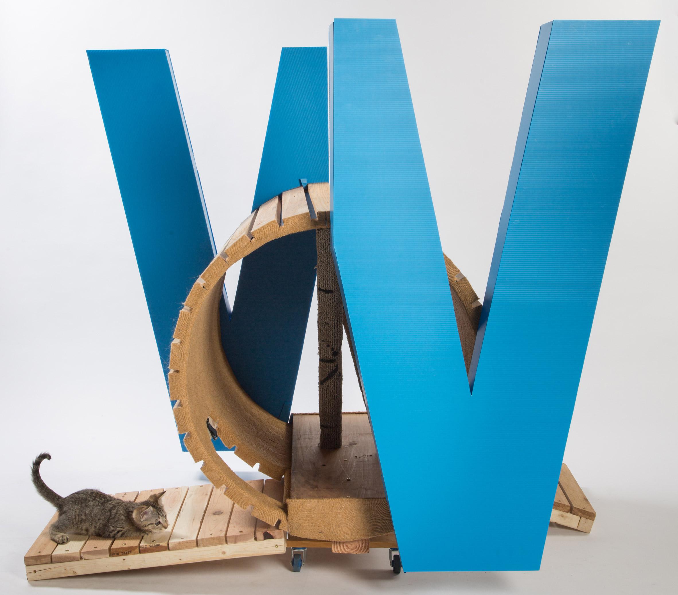 Cat's Win! Cat's Win! by Kollin Altomare Architects