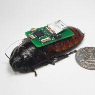 Wild robots could replace vanishing species, says Robotanica curator