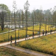 World Landscape of the Year 2017 goes to Chengtoushan Archaeological Park