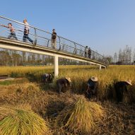 World Landscape of the Year 2017 teaches people about China's farming history, says Turenscape