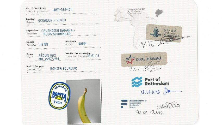 Icelandic Academy of the Arts graduates traced the global journey of a single banana from its originals to the store to show the complexity of the exportation process.