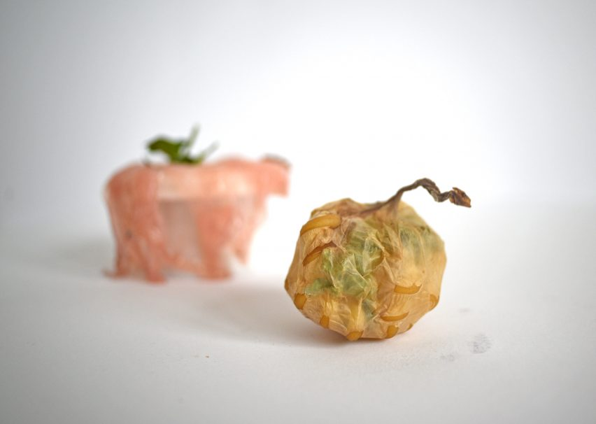 Roza Janusz creates sustainable food packaging that grows like a vegetable