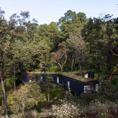 Woodland Architecture And Design Dezeen